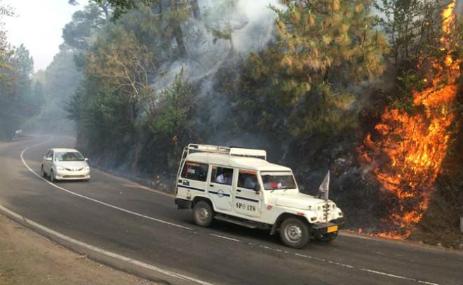В Індії вирують страшні  лісові пожежі