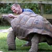більше 20 % рептилій перебувають під загрозою зникнення