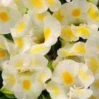 японські вчені виростили квіти, які світяться в темряві