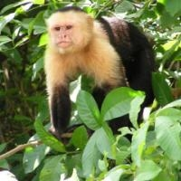 жінка, вихована мавпами, написала мемуари