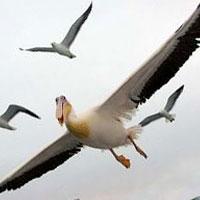 у пустельному районі перу виявили останки величезної викопної птиці
