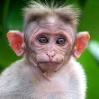 стародавні мавпи потрапили в азію з аравії