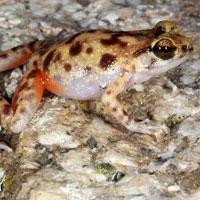 австралійські зоологи виявили одразу кілька нових видів тварин
