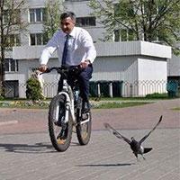 на роботу треба їздити не на авто, а на велосипеді, вважають вчені