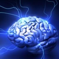 мозок жінок дорослішає раніше чоловічого