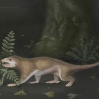 у китаї знайшли останки істоти, перехідного між ящером і ссавцям