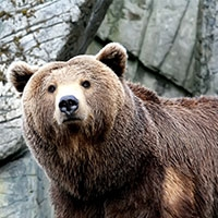 ізраїльські ветеринари прооперували хворий хребет ведмедя