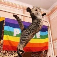 жінка позбулася кота з-за його гомосексуальних схильностей