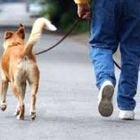 недбайливі власники собак в австрії будуть платити штрафи