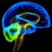особливості мозку змушує людей вживати солодкі і шкідливі продукти