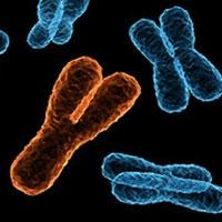 на думку генетика дженні грейвс, через п'ять мільйонів років чоловіків не стане