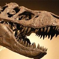 американець отримав термін за контрабанду скелетів динозаврів