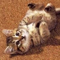 що говорить вам кішка?