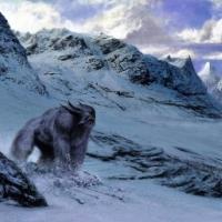 снігова людина виявився ведмедем