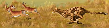 Хто швидше   антилопа або гепард?