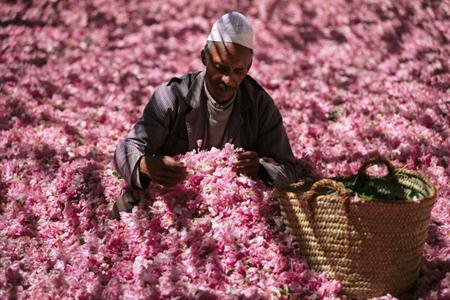 Фестиваль троянд в Марокко