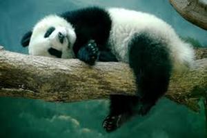 Яка тварина   символ Китаю?