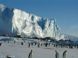 Хто живе в Антарктиді?