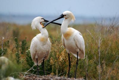 Птахи Казахстану, занесені в Червону книгу