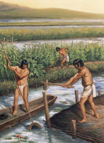 Яким було господарство майя?