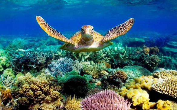 Чим знаменитий Великий Барєрний риф?