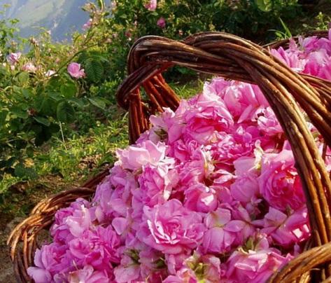 Де знаходиться Долина Троянд?